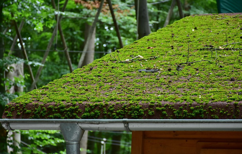 Plant Roofing